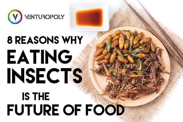 8 Reasons Why Eating Insects Is The Future Of Food Venturopoly