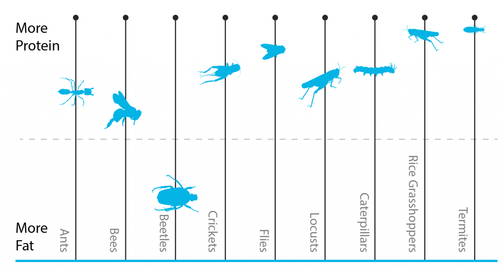 z-precision-nutrition-insect-protein-chart-1024x550